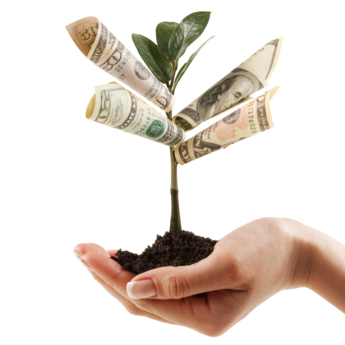 Money-tree.jpg